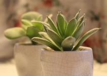 pianta in bagno