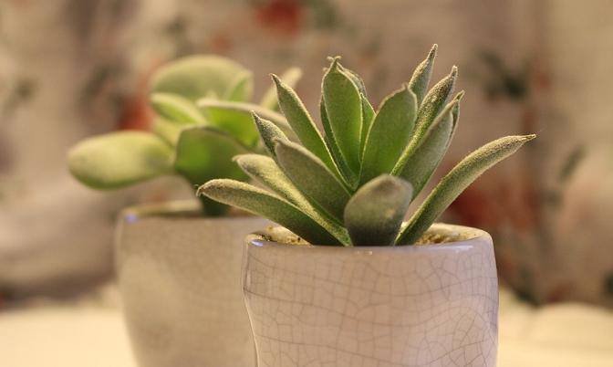 Come e perch arredare il bagno di casa con le piante - Pianta bagno ...